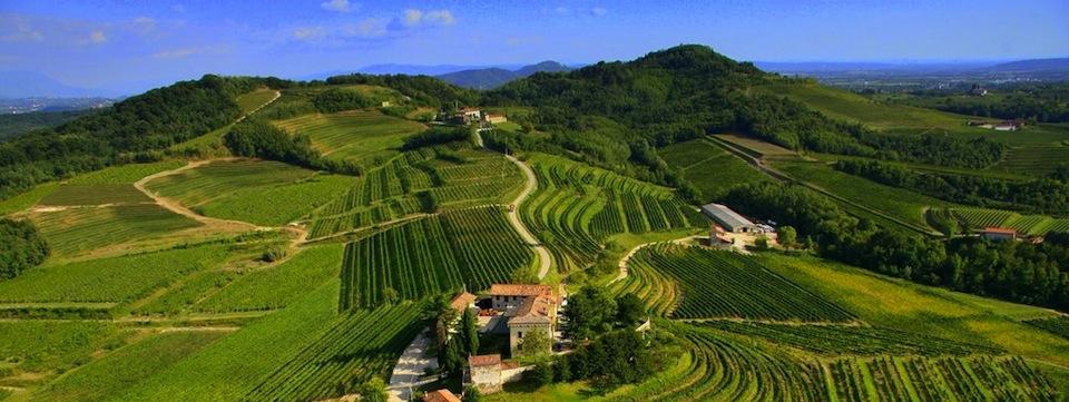 vini_colli_orientali_friuli_panoramica_vigneti