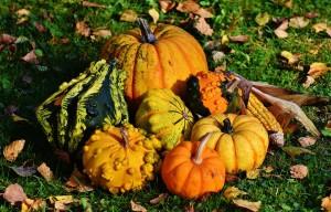pumpkins-1712841_1280